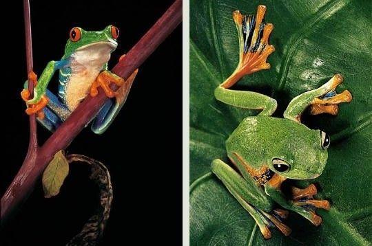 Pourquoi les amphibiens sont-ils importants???